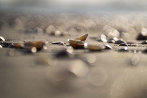 תמונה של צדפים בים